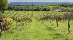 Taste Some Of The Most Unique Wines In America At The Tsali Notch Vineyard In East Tennessee