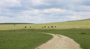 Hunt For Arrowheads On A Beautiful And Easy Tallgrass Prairie National Preserve Trail In Kansas