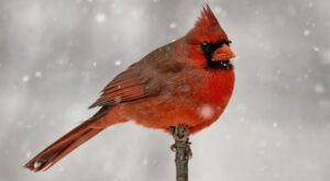 7 Birds That Brave The Snow And Cold To Spend The Winter In West Virginia