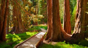 Sequoia National Park: Wander In Wonder Through An Ancient Forest In California
