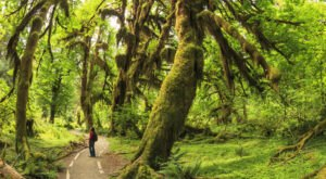 Hoh Rain Forest, Washington: Discover An Emerald Oasis & The Quietest Square Inch In America