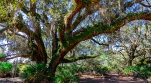 This 5 Mile Loop Through Split Oak Forest In Florida Is The Perfect Daytime Adventure
