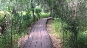 The Old Barataria Trail Will Show You A Completely New Side Of Louisiana