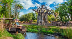 Go On A Realistic Safari As You Make Your Way Through Kilimanjaro Safaris In Florida