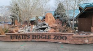 10 Reasons To Bundle Up And Visit Utah's Hogle Zoo This Winter