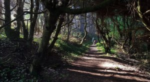 Take An Easy Trail To Enter Another World On The Yurok Loop Trail In Northern California