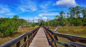 Explore Nearly 18 Square Miles Of Unparalleled Views Of Skidaway Island On The Scenic Hike In Georgia