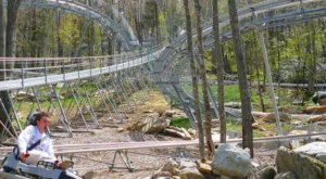 Ride Through North Carolina On The Epic Wilderness Run Alpine Coaster