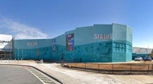 Explore North Carolina's Only Ocean Tunnel At Sea Life Aquarium In Charlotte