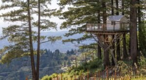 Sleep In A Treehouse Overlooking A Vineyard In Northern California For A Truly One-Of-A-Kind Stay