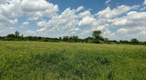 Explore 18,094 Acres Of Unparalleled Views Of Grassland On The Scenic Buffalo Viewing Trail In Illinois