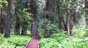 Escape To Ross Creek Cedar Grove For A Beautiful Montana Nature Scene
