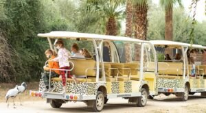 Go On A Realistic Safari As You Make Your Way Through Wildlife World Zoo In Arizona