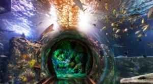 Explore Texas' Only 360-Degree Ocean Tunnel At Sea Life Aquarium In Grapevine