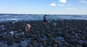 Hunt For Sand Dollars On The Beautiful And Easy Long Sands Beach In Maine