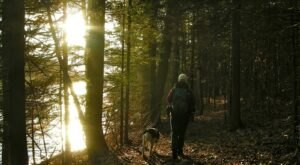 The Merrill Creek Reservoir Perimeter Trail Will Show You A Completely New Side Of New Jersey