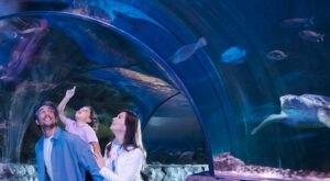 Explore Michigan's Only Ocean Tunnel At Sea Life Aquarium In Auburn Hills