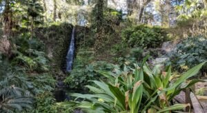 The Rainbow Springs Trail In Florida Is A 2-Mile Out-And-Back Hike With A Waterfall Finish