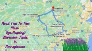 Take This Road Trip To The 5 Most Eye-Popping Lavender Fields In Pennsylvania