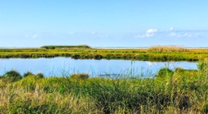 Experience Louisiana's Marshes Like Never Before At The 125,000+ Acre Sabine National Wildlife Refuge In Louisiana