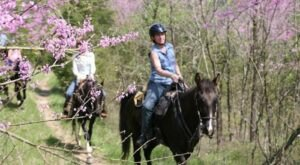 Explore Kentucky On Horseback With A Fun-Filled Trail Ride With Whispering Woods