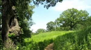 The Wildflower Loop, A One-Way Trail Through The Eloise Butler Wildflower Garden, Is A Minnesota Must-Do