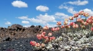 The Spring Wildflower Bloom At Craters Of The Moon In Idaho Is A Sight To Be Seen