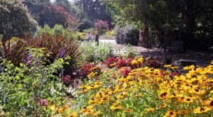 The Descanso Gardens In Southern California Will Have Over 1,600 Roses In Bloom This Spring