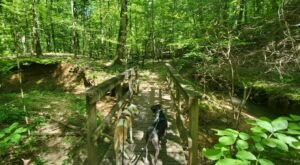 Take An Easy Loop Trail To Enter Another World At Noxubee Wildlife Refuge In Mississippi
