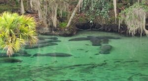 Hike To An Emerald Lagoon On The Easy Pine Island Trail In Florida