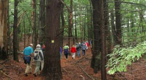 New Hampshire's Sheldrick Forest Has Some Of The Oldest Living Trees In America