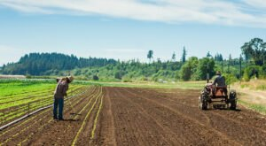Once You Buy Fresh Produce At Gathering Together Farm In Oregon, You Won't Shop Anywhere Else