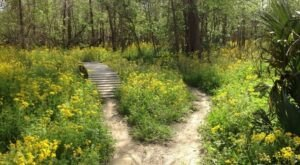 This 5-Mile Spillway Trail In Louisiana Is The Perfect Springtime Hike