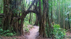 Manoa Falls Trail Is A Beginner-Friendly Waterfall Trail In Hawaii That's Great For A Family Hike