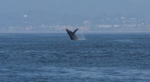 This Coastal Oregon Town Has The Best Whale Watching In The State