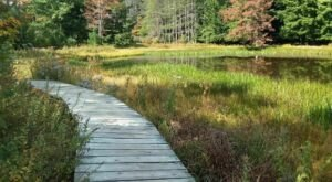This Pennsylvania Park Has Endless Boardwalks And You'll Want To Explore Them All