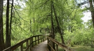 Mesmerizing Views Await Along The Lake Martin Loop Trail In Louisiana
