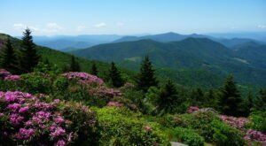 The Springtime Wildflowers Are Absolutely Stunning At Roan Mountain State Park In Tennessee
