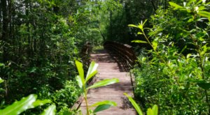 Surround Yourself With Stunning Scenery At The Abita Creek Flatwoods Preserve Near New Orleans