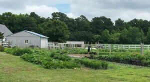 Hook Family Farm Is A Tiny Delaware Farm That Grows Fresh Produce, Flowers, And More