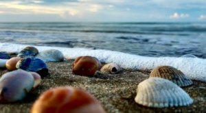This Hidden Beach Along The Louisiana Coast Is The Best Place To Find Seashells