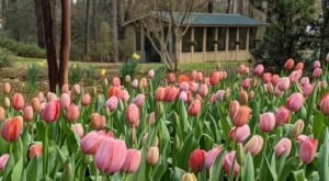 Louisiana's Kiroli Park Features 150 Acres Of Beautiful Blooms Perfect For Spring Adventures