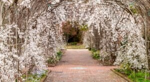 Home To 50 Acres Of Beautiful Virginia Blooms, Visit Lewis Ginter Botanical Gardens This Spring