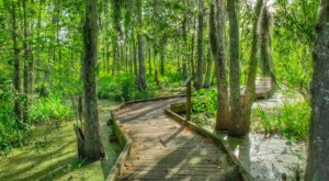 Over 9,000 Acres Of Beautiful Forested Landscape Can Be Found At Bayou Teche National Wildlife Refuge