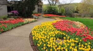 See Over 150,000 Blooming Tulips At The Annual Cheekwood In Bloom Festival In Nashville