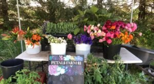 You Can Cut Your Own Flowers At Petals Farm In Rhode Island