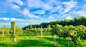 Venture Down The Shores Of Lake Champlain On This Adirondack Wine Trail In New York