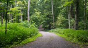 The Awesome Pioneer Mothers Memorial Forest Trail In Indiana Will Take You Straight To An Abandoned Native American Site