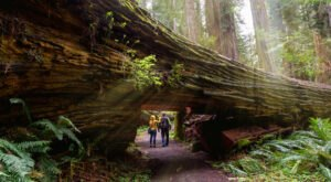 Redwood National Park: Get Lost Amongst The World's Tallest Trees In California