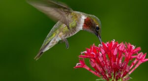 Keep Your Eyes Peeled; Thousands Of Hummingbirds Are Headed Right For Nebraska During Their Migration This Spring
